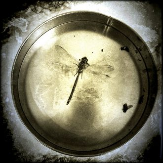 "Robert Aller - ""Dragon Fly"" © photograph."